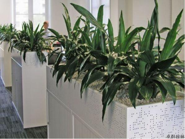 北京恒美广告有限公司室内植物租赁